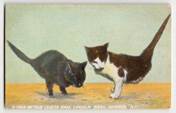 1909: A blue Maltese cat near Sydney, Australia, gave birth to three consecutive litters of half-kittens.