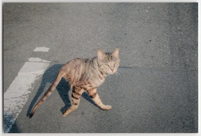 2012, Japan, Makoto Satsukawa, professional half-cat photographer. Courtesy of the Estate of James Alexander.