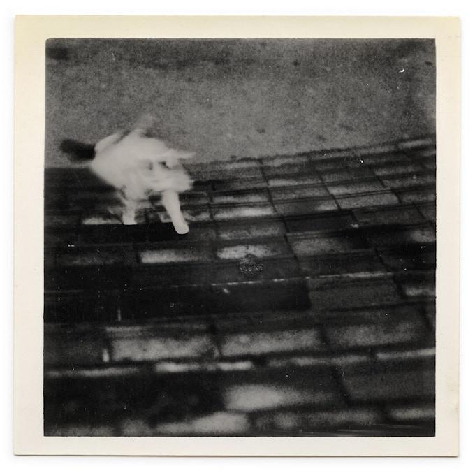 Photo, 1908, captured on a Kodak Brownie by James Alexander.