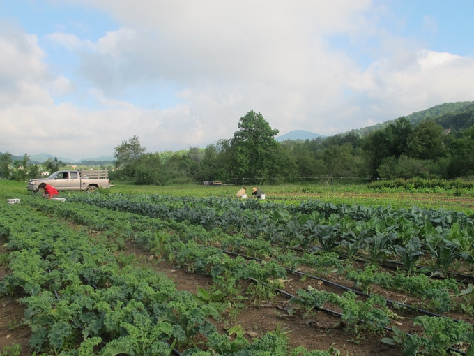 Managing spring crops at New Life Farm