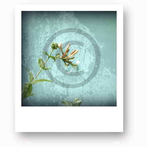 One of our rewards. Snap Happy #2 is simply called 'Summer.' A limited edition photo canvas by Happy.