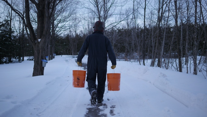 Phillip gathering sap for lab testing.