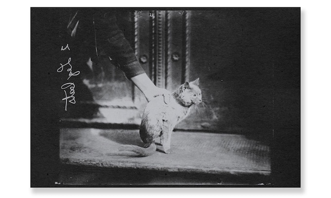 "Man holding a half-cat. Chicago, 1909. [RISO: Grey ink on 18•12"" black paper]"