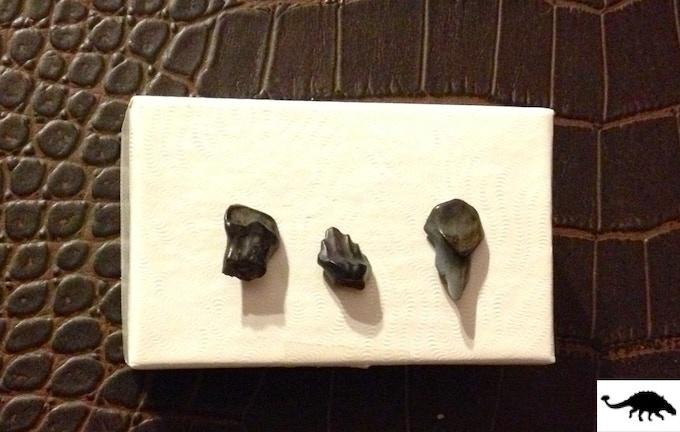 Reward 10: 1 Genuine Fossil Ankylosaur Tooth! + Lucky Raptor Foot keychain & sticker