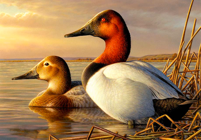 The Million Dollar Duck - the Duck Stamp documentary by Brian Golden