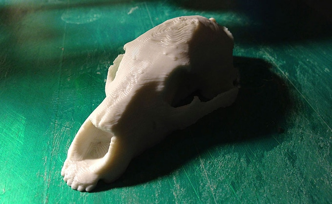 Scanned Grizzly Skull by Mary-Margaret Murphy printed on Helix in Natural ABS