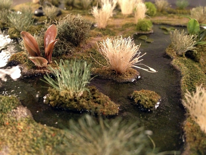 Swamp Water Close-Up