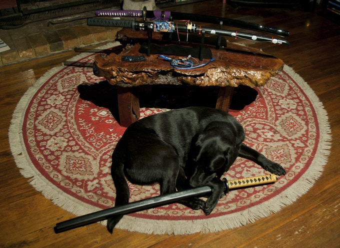 Katana Dog at the end of the day