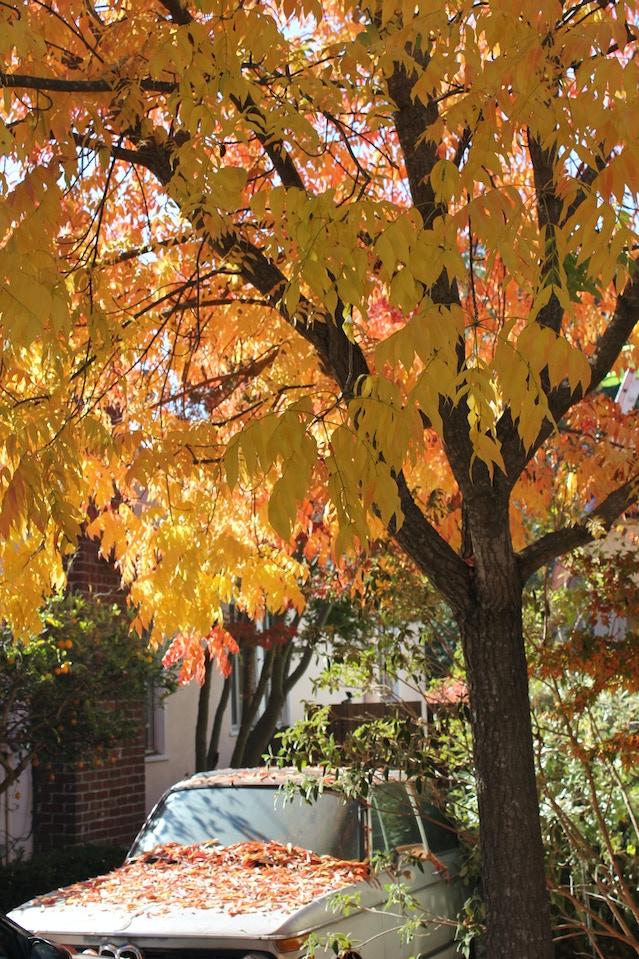 Leaves in the Neighborhood