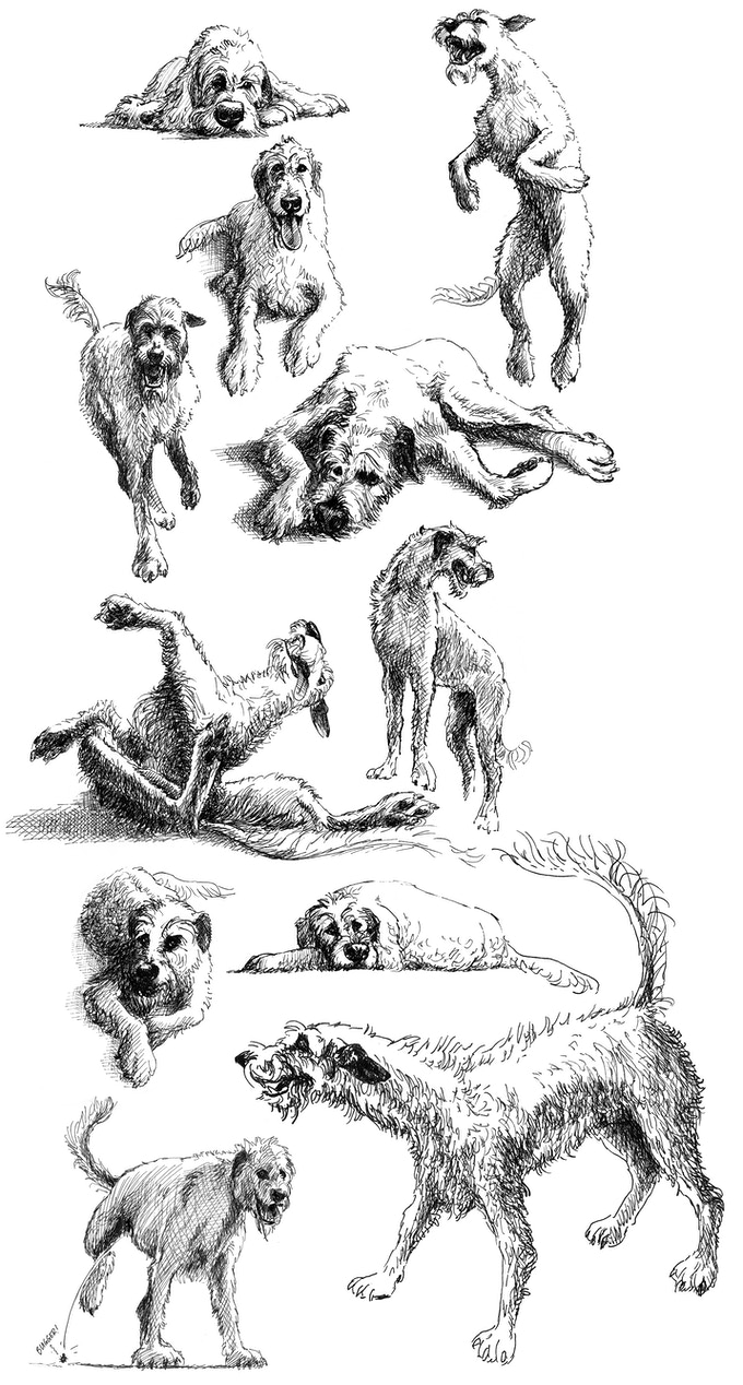 Just some of the smaller pics of Gelert that will pepper the book