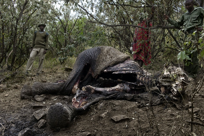 Rangers inspect an elephant carcass in the Masai Mara.