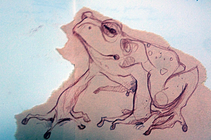 A poorly photographed sketch I did of a cane toad.