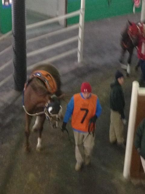 Pookie's Last Race, 11-11-2013