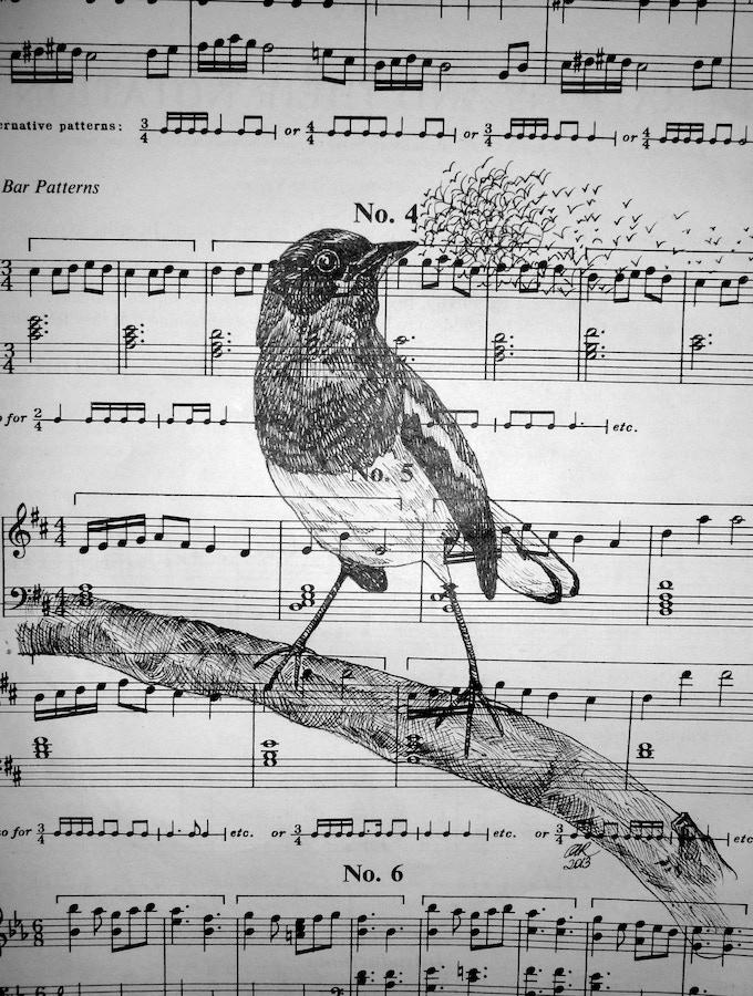 Carol Ramsey 'Birdsong' Ink on vintage music sheet 2013