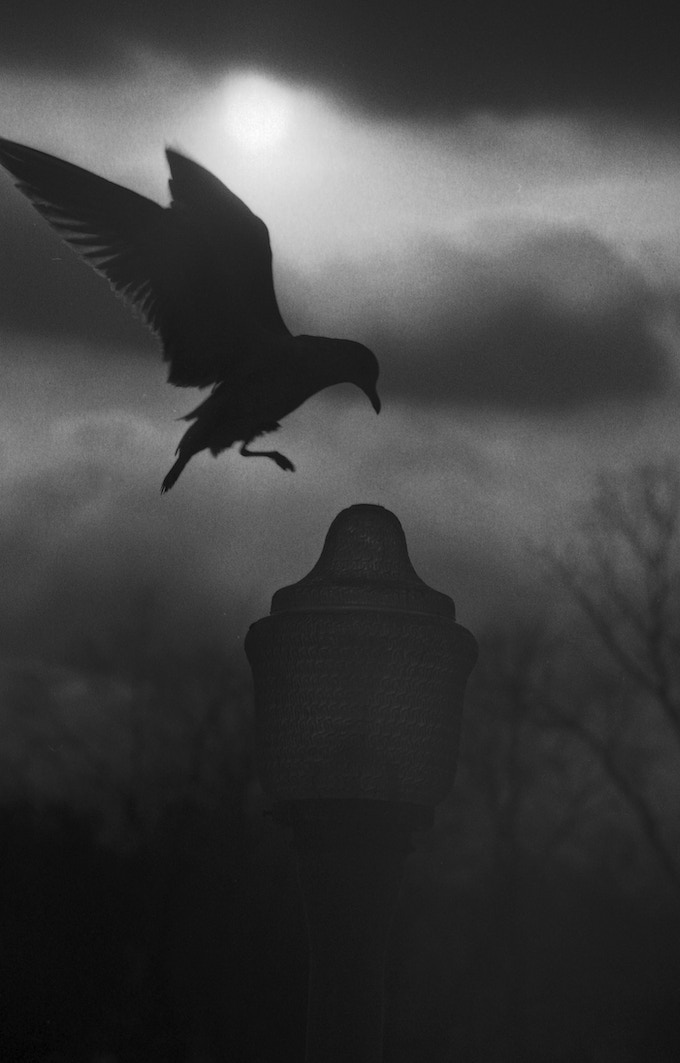 """This is a re-creation of my favorite photo. The original was an eagle landing on a jutting precipice. This bird landing on a lamppost mirrors the preciseness of the moment, the contrasting shades of grey, and the bird's concentration as it lands."""