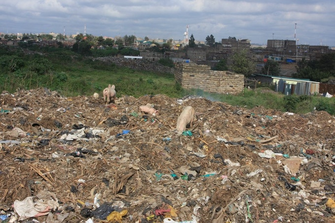 Pigs feeding from the dump and a view of Nairobi in the distance.