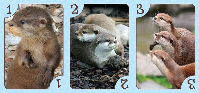 Basic otter cards, worth 1, 2 and 3 points toward winning a playground