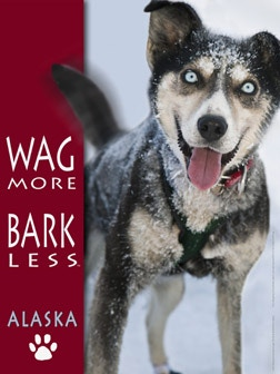 """This is the 9""""x12"""" Wag More—Bark Less"""" mini-poster reward.  The dog's name is """"Simbol"""" (sic), a member of  Sonny Lindner's team.   Note:  Wag More—Bark Less is a registered trademark, under license from the Cloudstar Corporation."""