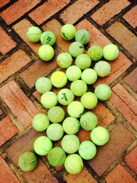 Life is good bathing in sunshine for these soon to be up-cycled tennis balls after being exiled. They have a bright future ahead with The Tugachuk™.