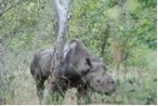 Picture Courtesy of Lowveld Rhino Trust