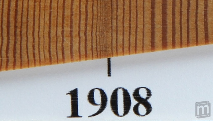 Macro-view of fir tree core that survived Tunguska.