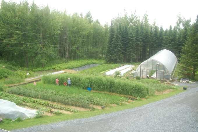 The garden in 2013/ Le jardin en 2013