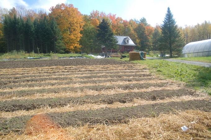 The new annual garden after the x-mas trees/ Le nouveau jardin de légumes après les sapins