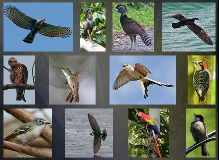 Endangered or Extinct Birds in México's Yucatán Peninsula