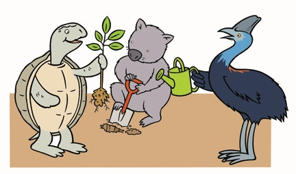 Green Lane Diary characters: Shelly, the western swamp tortoise; Wazza, the northern hairy nosed wombat; and Kylie the southern cassowary.