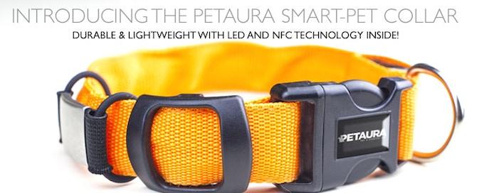 The PETAURA SmartPet Collar in Hunter's Orange