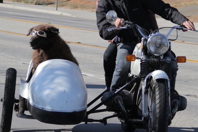 Artie the Sidecar Dog in Redding, California