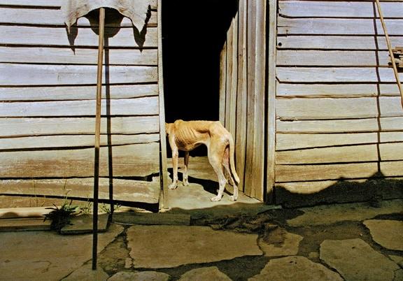 Dog By Door, Viñales, Cuba, 2003