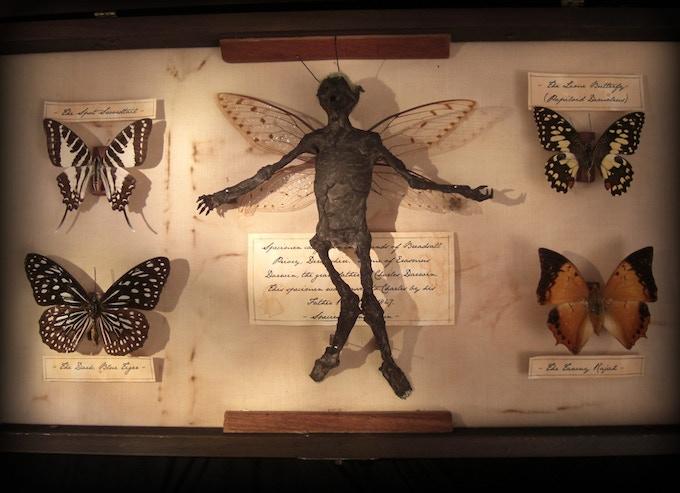 Darwin's Secret Collection 2009