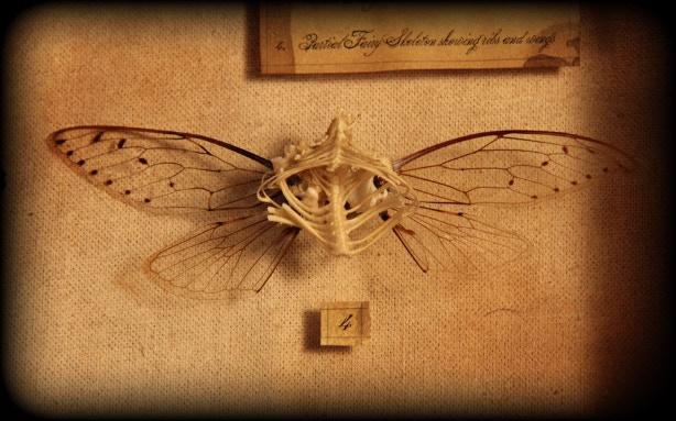 Fairy Bones 2012