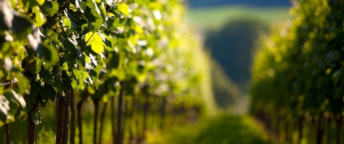 Up close and personal - where your favourite wine comes from.