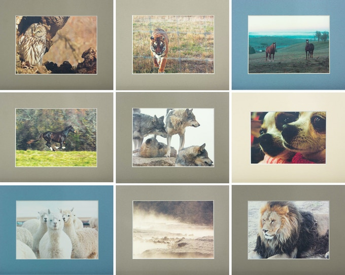 Witness the majesty of rescued animals.  ADMIRATION LEVEL: A ready to frame animal print on linen stock with matte