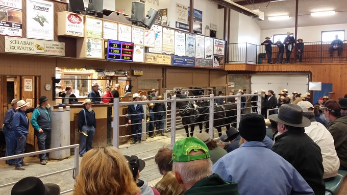 A team of siblings auctioned off at Mt. Hope last month (my cell phone photo)