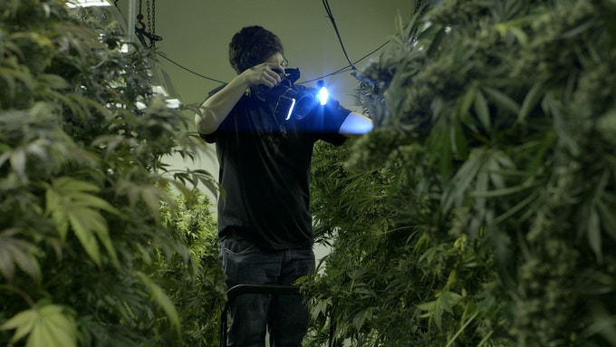 The Cannabist Staff Photographer & Marijuana Critic, Ry Prichard