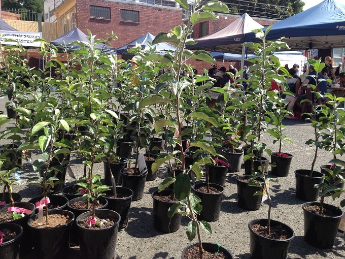 At the Hobart markets selling our maiden heritage apple trees.