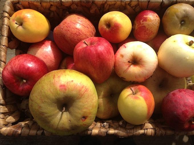 Heritage apples taste and smell soooo good!