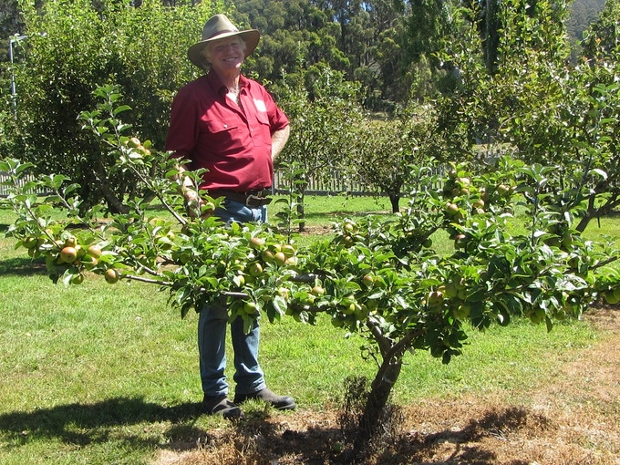 Grant visiting Port Arthur Historic Site to collect apple scion wood.