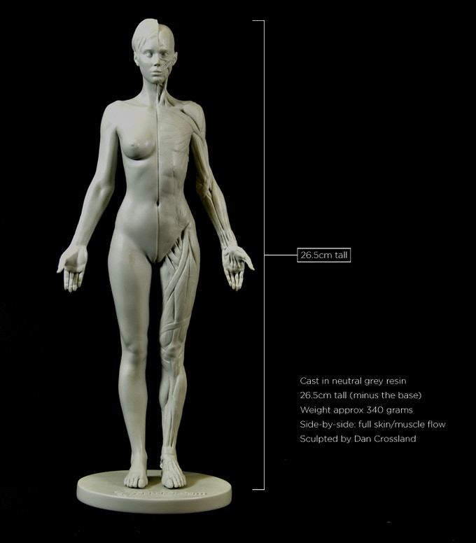 3dtotals Anatomical Collection Female Figure By 3dtotal Games