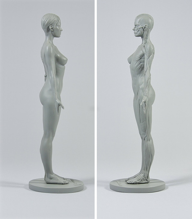 3dtotals Anatomical Collection Male Figure By 3dtotal Games