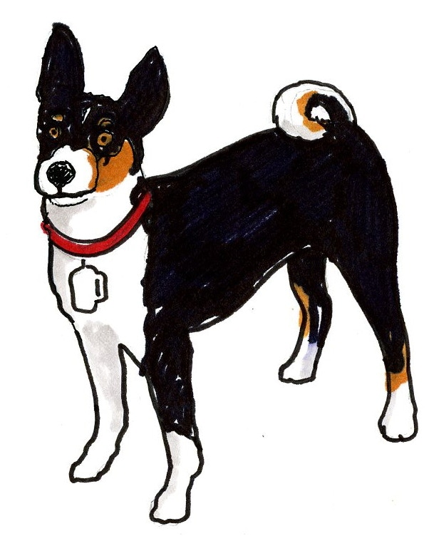 Our Basenji, Quincy, was the inspiration for the Little Dog Logo.