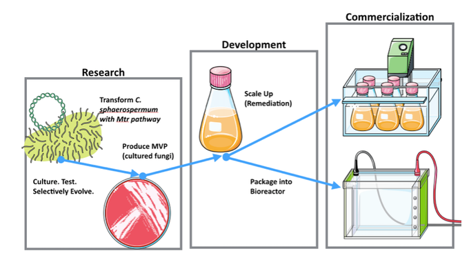 Depiction of development process from research to commercialization.