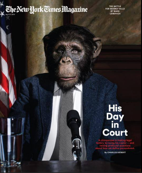 April 27th New York Times Sunday Magazine cover story on Steve Wise and the Nonhuman Rights Project