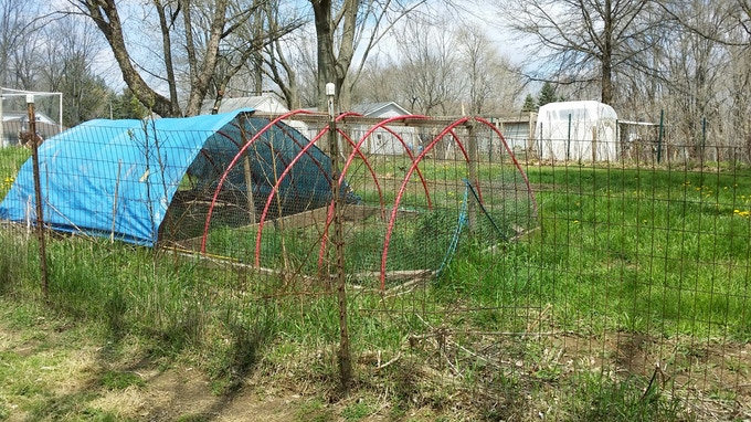 Primary chicken tractor (used for nighttime predator protection)