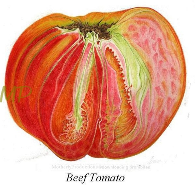 If a woman wants to be a poet she must dwell in the house of the Tomato, (Erica Jong)