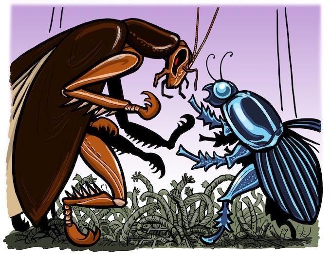 Full Roach vs. Beetle Piece
