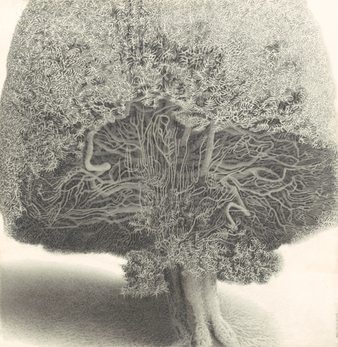 """THIS IS A NEW PRINT THAT I HAVE ADDED FOR YOU TO CHOOSE FROM.It is Yew Tree #108. It took over 650 hours of """"plain air' drawing time to complete.This is the most intensive drawing that I have done to date."""